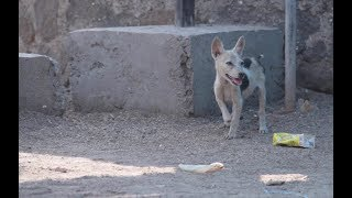 All We Need Is Love - Documentary On Indian Stray Dogs (sos)