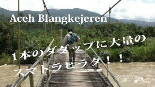 原生林クワガタ採集Ⅲ(下に動画内の訂正があります)BIO INSECT=http://...