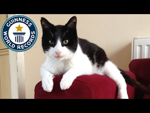 Loudest Purring Cat - Guinness World Records