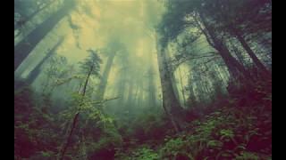 ~☯~Dark Goa Trance/PsyTrance Mix~ 🐍~