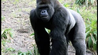 Pangani Forest Exploration Trail Video Tour - Disney