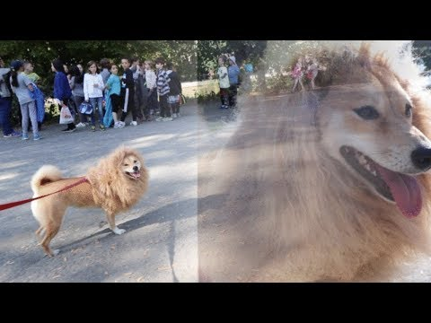HALLOWEEN LION PRANK IN CENTRAL PARK, NYC!