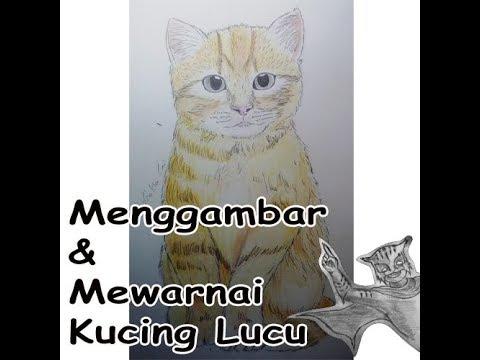 Menggambar Dan Mewarnai Kucing Lucu Youtube