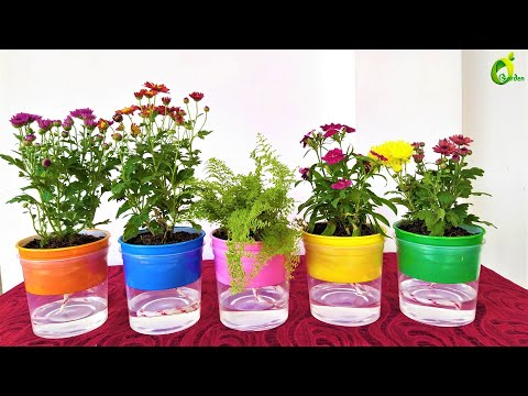 ❤Self Watering For Plants/Self Watering system for plants/ORGANIC GARDEN❤