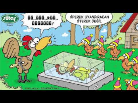 Komik tavuklar