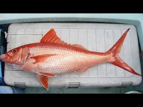 Deep Drop Bottom Fishing !!  I Feel The Charm Of The Sea