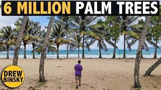 6 MILLION PALM TREES
