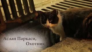 Город кошек: персонаж Аслан Паркаси (Документальный/ США, Турция/ 6+/ в кино с 30 ноября 2017)