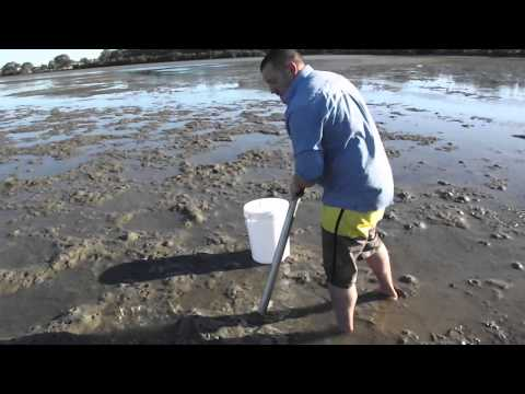 How To Pump Salt Water Yabbies