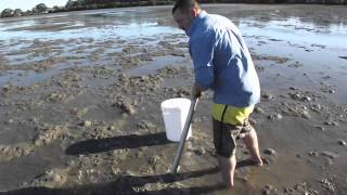 One of teammadmullet's most viewed videos: how to pump salt water yabbies