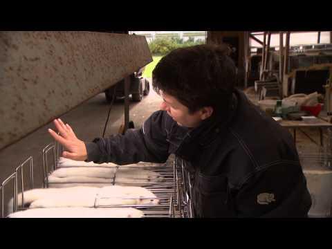 De la jaula al abrigo: la vida de los visones