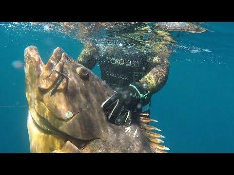Mero De 35 Kg Pesca Profunda De Jesus Jimenez Reyes Del Quipo Polosub Y CarbonioGFT