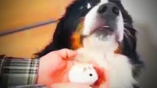 Funny Dogs    Pet Dogs Being Funny (Part 1) [Funny Pets]