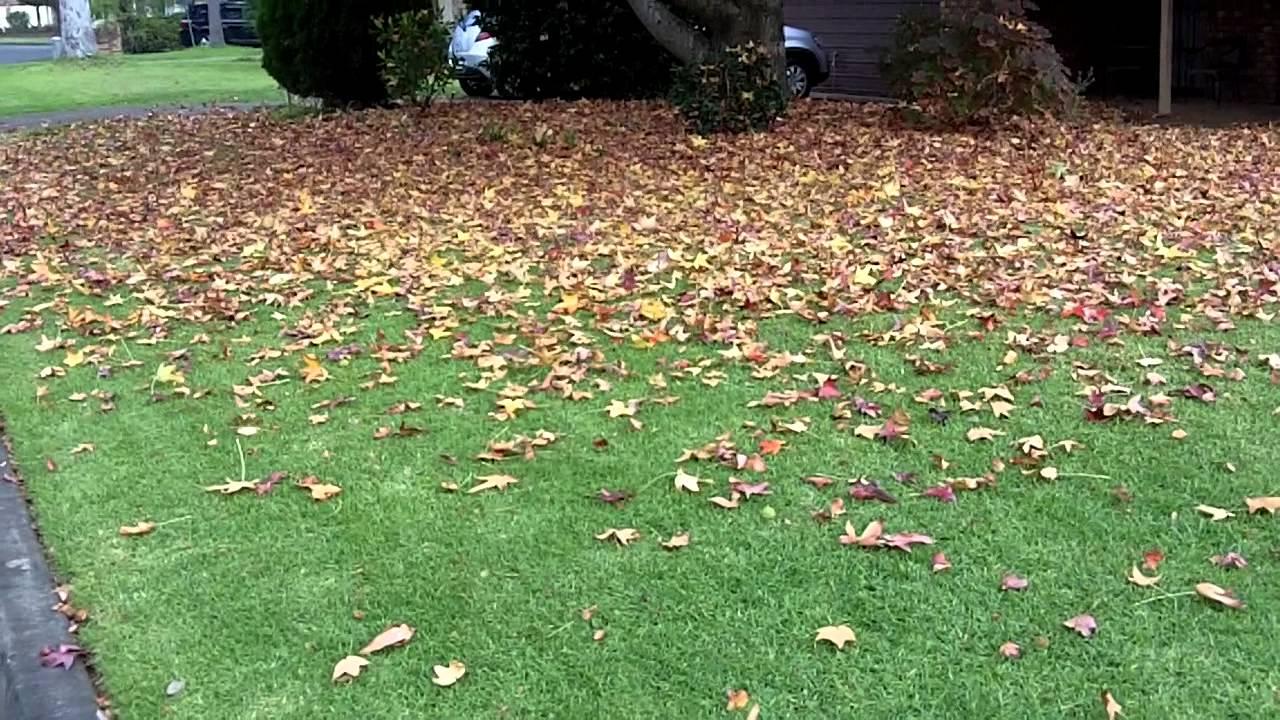 lawnmowing sydney - photo#8