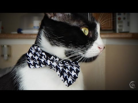 DIY Bow Tie For Pets | The Sweetest Journey