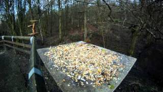 Feeding The Birds On A Gopro At Spring Wood At Whalley