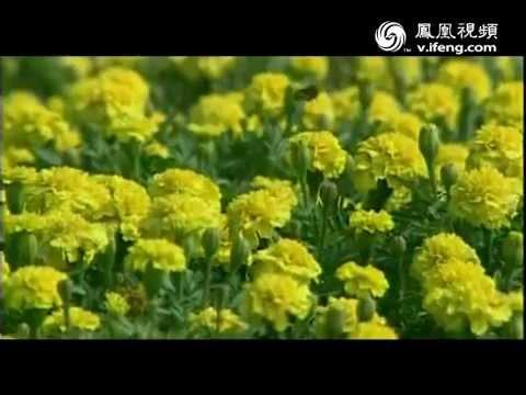 黄梅戏乡 人文名城 — 中国安庆 Famous Artistic City Anqing China