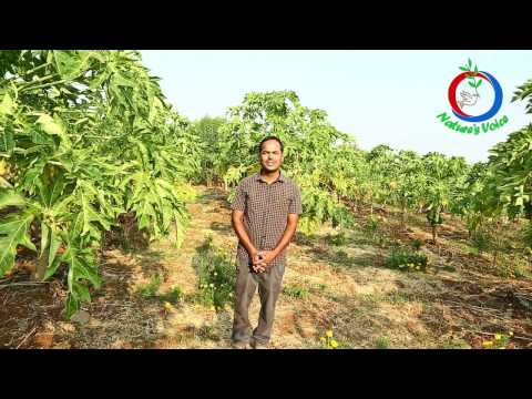 Natural Farming | Software Engineer turns a Successful Farmer (Telugu) | Parthasarathi-1