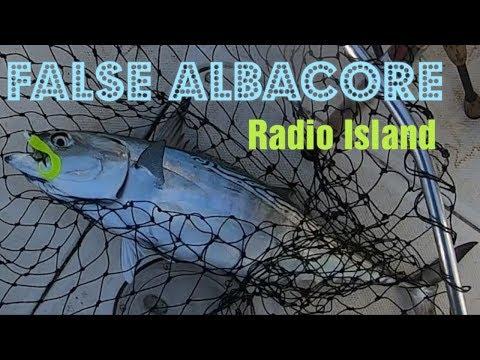 CATCHING FALSE ALBACORE (RADIO ISLAND)