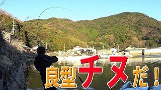 やっぱり蒲江のチヌはパワフルに引きます