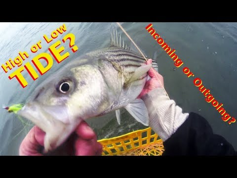 High Or Low Tide? - The BEST TIME To CATCH STRIPED BASS - Incoming Or Outgoing Water?