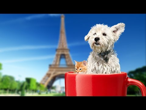 Placing pets at Eiffel tower with Superimpose