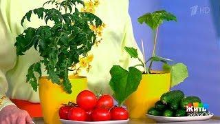 Жить здорово! Какие растения нельзя сажать рядом (28 06 2017)