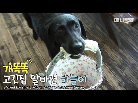 사장님.. 오늘 정산이 안맞는데요?ㅣ7th year working at the meat restaurant..the dog is better than people LOL