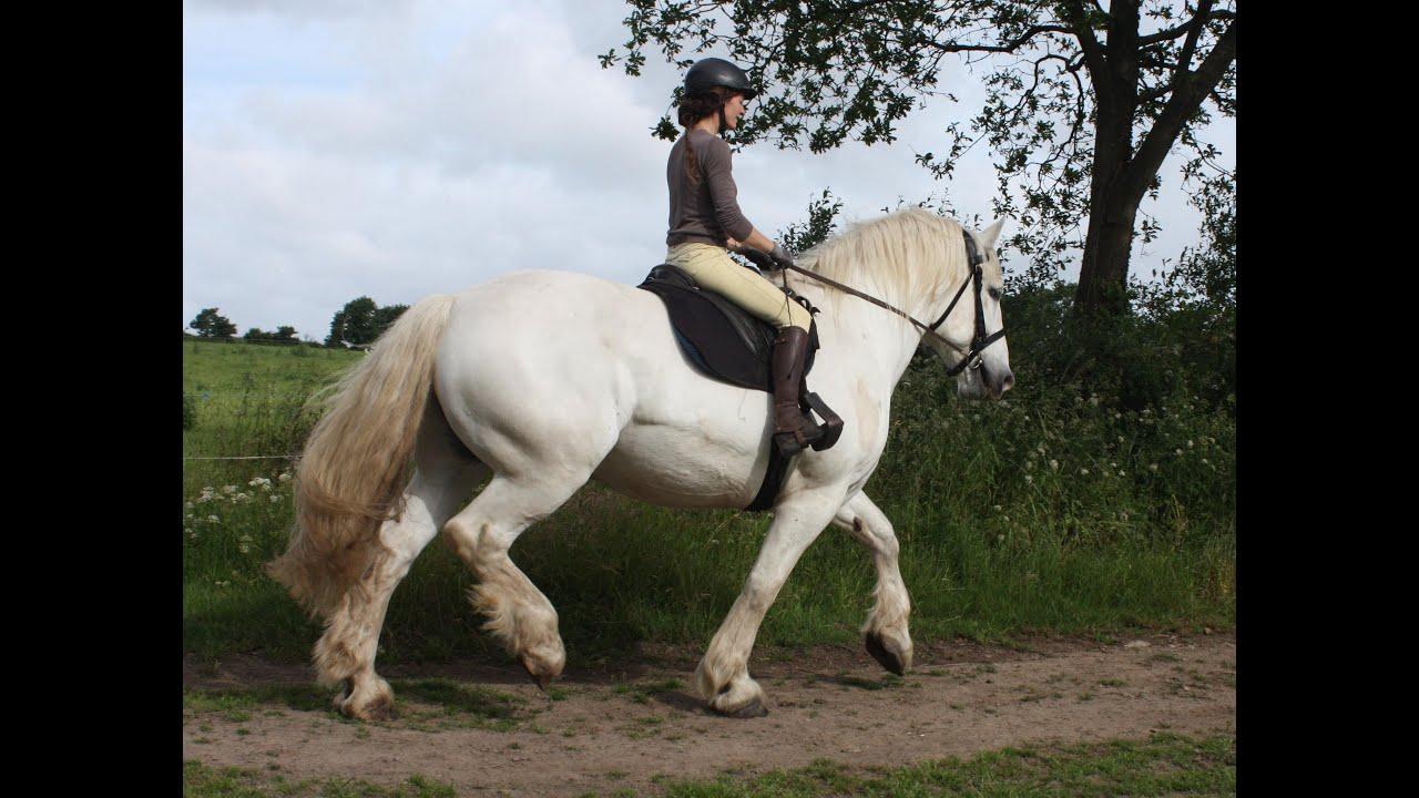 cheval de trait percheron a vendre