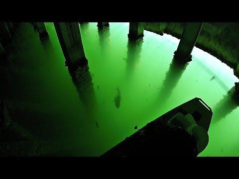 Kayak Fishing- EPIC Mangrove Snapper, Sheepshead, & Black Drum Frenzy!