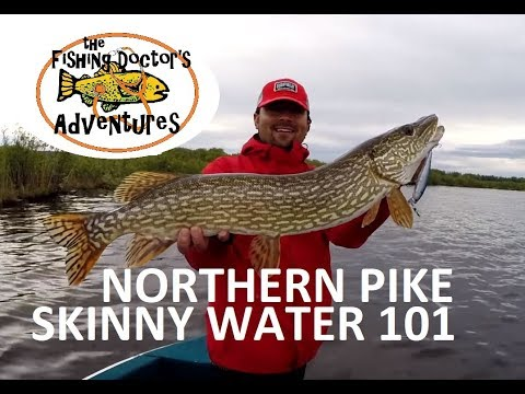 How To Fish Spring Northern Pike In Shallow Water