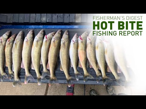 Walleyes On Lake Erie, King Salmon Fishing And More - Hot Bite Fishing Report - May 21