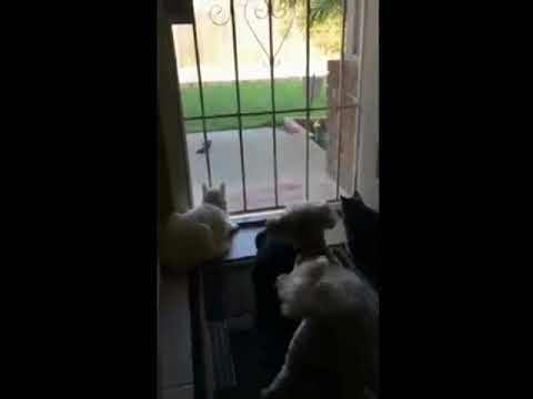 Dog scares cats FUS RO DAH skyrim funny version