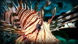 Komodo and Sumatra: Land of Dragons (part 2/5)