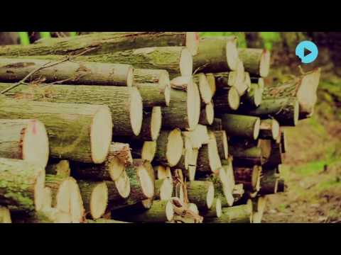Indian Investors Hit Badly After Laos Ban on Timber Export
