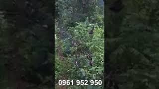 Ngàn chú chim dính lưới tàng hình