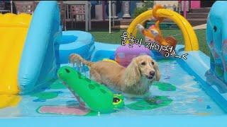 SHORT) 물놀이하는 강아지 / 고양이 같은 닥스훈트 말랑이