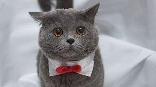 Самые смешные коты и кошки! Funny cats 2015. Смешное видео про котов и кошек!