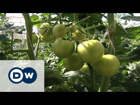 Urban Gardening: Gemüse direkt aus der Stadt   Made in Germany