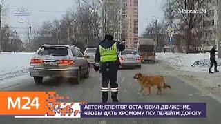 Автоинспектор остановил движение, чтобы дать хромой собаке перейти дорогу - Москва 24