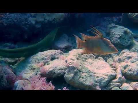 Pickles Reef & Coral Canyons - Key Largo - 11/03/17