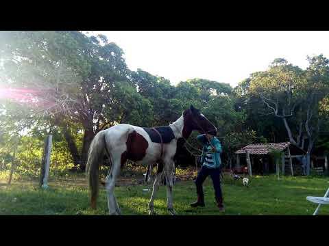 Criança Domano Cavalo