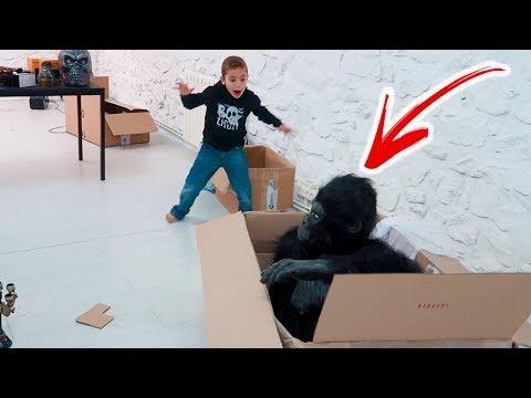 PRANK - Swan attaqué par un gorille ! 🦍😱