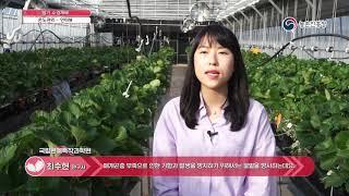 딸기 수경재배 - 6. 온도관리_기형과 발생방지