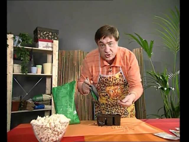 Правильная посадка кукурузы на