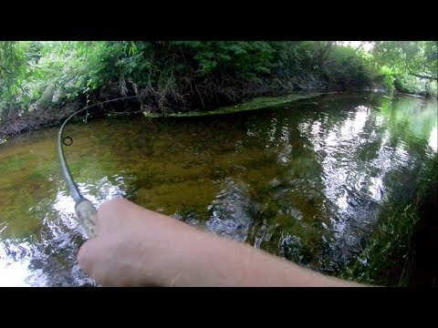 Shallow Clear Creek fishing for Big Fish!