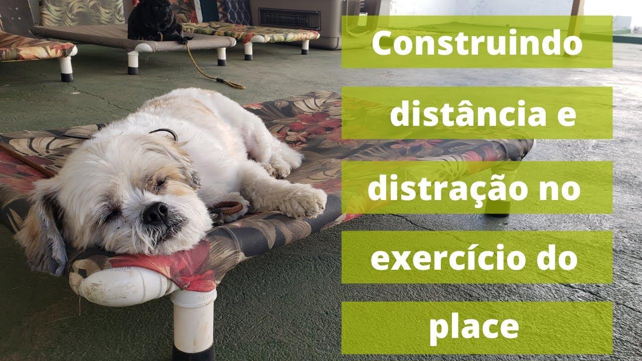 A Construção do Exercício do Place e a aplicação na vida real do Luke, um cachorro reativo.