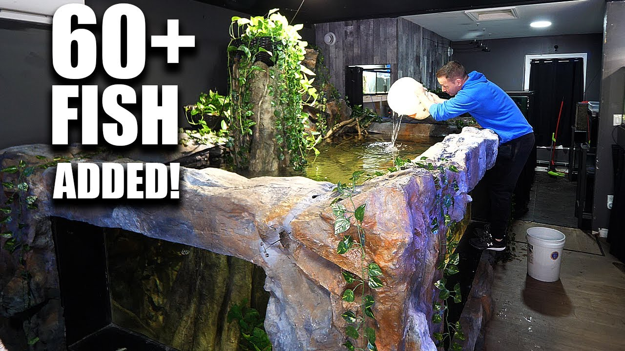 ADDING FISH TO 2,000G AQUARIUM!