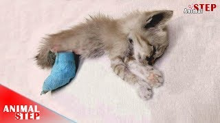 Heartbreaking – Pitiful Kitten Struggled to Live But She Can't