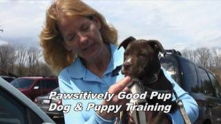 Dog Training Made Easy With Pawsitively Good Pup Dog Training - Berea, Ohio